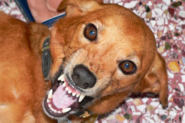 Aggressive Dog Training Pennsylvania