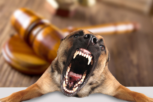 Can You Sue A Dog Owner For A Dog Bite