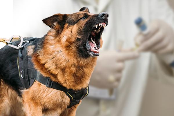 dog bite euthanasia, aggressive dog euthanasia, dog bite laws, euthanasia aggressive dog, euthanize dog after dog attack, put a dog down after dog bite