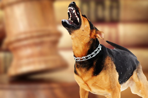 dog bite laws, dog attack laws, law on dog attack, dog bite law Philadelphia, dog bite law liability