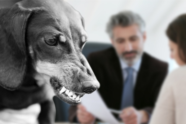 dog bite lawyer, dog attack lawyer, lawyers for dog attacks, lawyer for dog bite, attorney for dog attacks, dog bite attorney, lawyers for dog bites