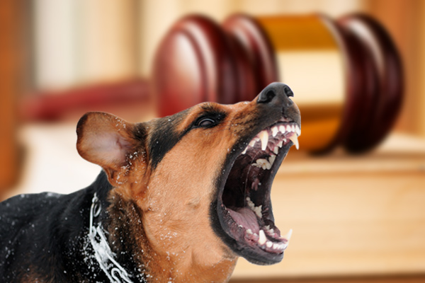 dog bite liability, proving negligence after a dog bite