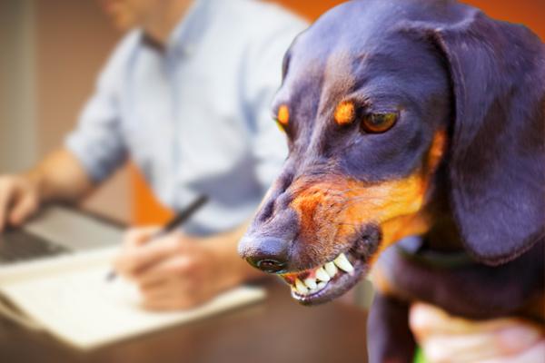 dog attack statistics,dog attack facts,statistics on dog attacks,dog attacks