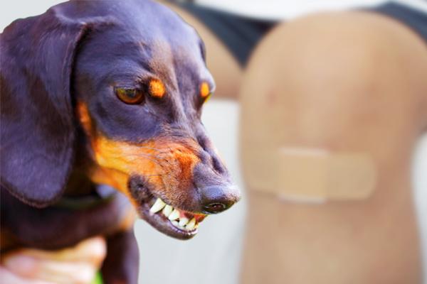 dog bite wounds, dog bite injuries, dog bite wound treatment