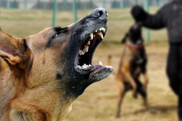 how to prevent dog attacks, preventing dog bites, how to prevent dog bites, prevent dog bites