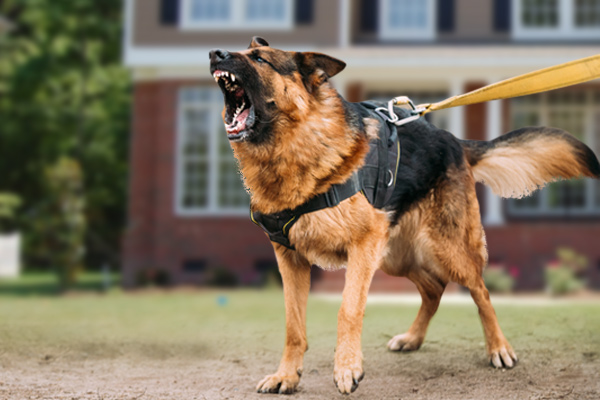 landlord liability in dog bite, landlord liability for dog bite, landlord liability for tenant's dog, landlord liability for dog attack, can a landlord be held liable for dog attack