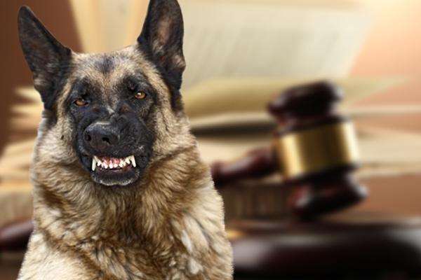 dog bite laws, dog bite laws in Philadelphia