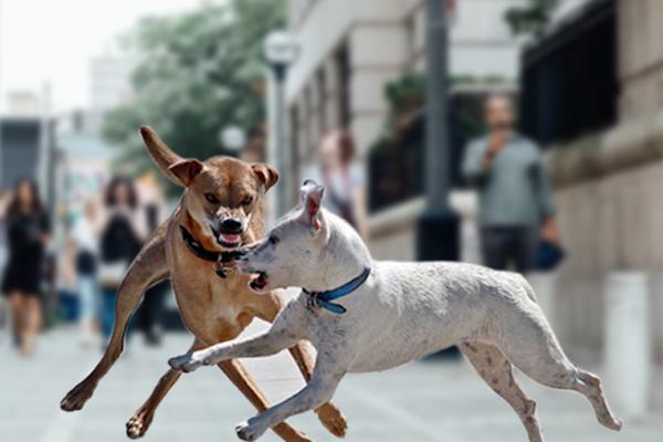 dog bite liability, dog bite negligence, owner liability dog attack