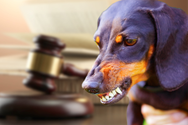 dog bite laws by state, dog bite laws Philadelphia