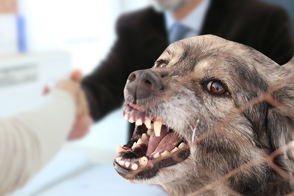 dog bite lawsuit settlements, pain and suffering dog bite lawsuit settlement, dog bite compensation for pain and suffering