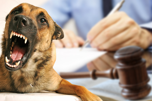 dog bite lawsuits, injury lawsuit for dog bite, injury lawsuit for dog attack, file dog bite lawsuit, lawsuit dog bite, dog bites lawsuit, getting bitten by a dog, bitten by dogs