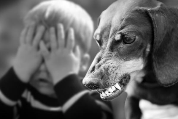 if a dog bites a child what happens, dog bite kid, child bitten by dog, child bitten by dog what to do, dog bites child, what happens if a dog bites a child, children bitten by dogs, being bitten by a dog