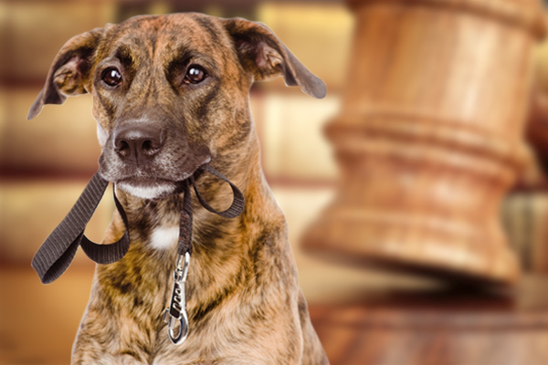 Leash Laws in Philadelphia Pennsylvania, leash laws,leash law, dog leash laws, leash law for dogs, leash law fines, Philadelphia leash law, leash law violation
