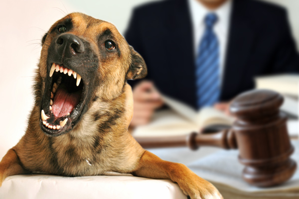 dog bite laws, one bite state, dog ordinances, animal ordinances